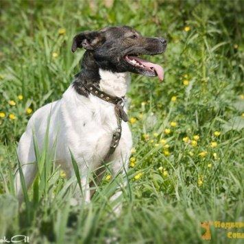Катька - Собаки в добрые руки