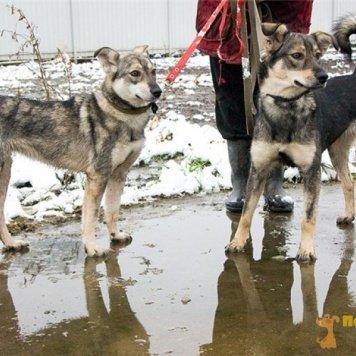 Альма и Малышка - Собаки в добрые руки