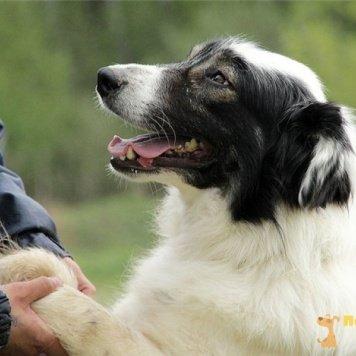 Бьюти - Собаки в добрые руки