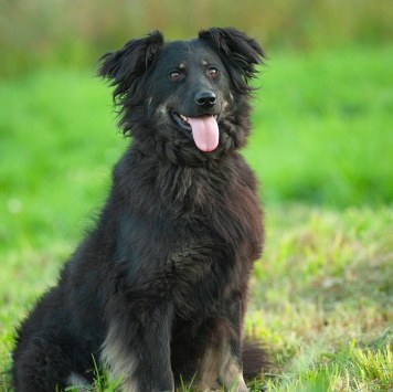 Эсмеральда - Собаки в добрые руки