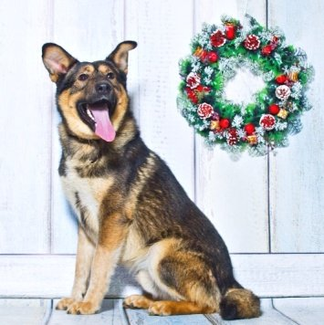 Бараш - Собаки в добрые руки
