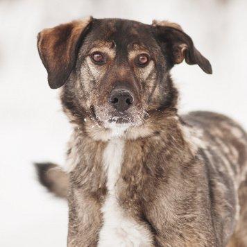 Курт - Собаки в добрые руки
