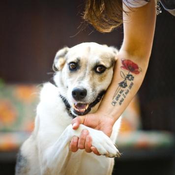 Умайя - Ума - Собаки в добрые руки