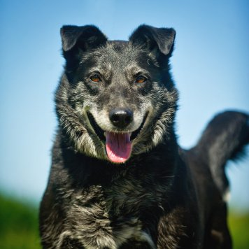 Берда - Собаки в добрые руки