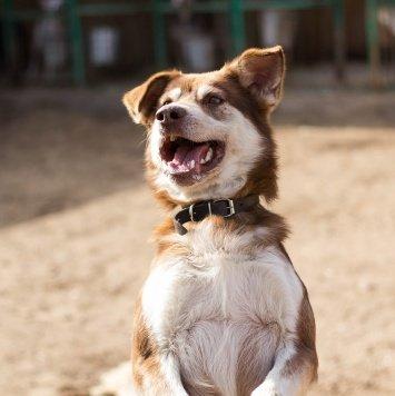 Шакки - Собаки в добрые руки