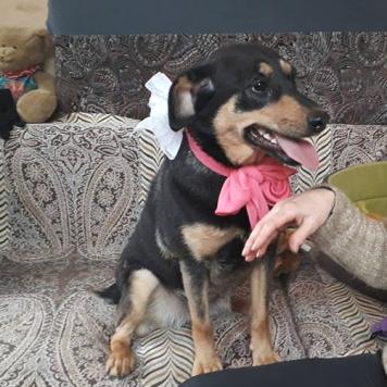 Грэмми - Собаки в добрые руки