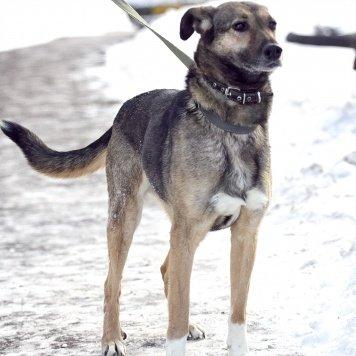 Риджи - Собаки в добрые руки