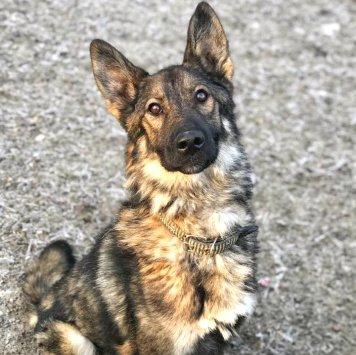 Зак - Собаки в добрые руки