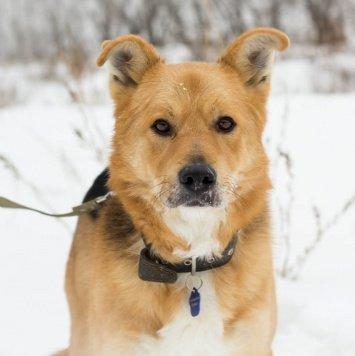 Норман - Собаки в добрые руки