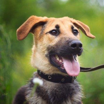 Тимон - Собаки в добрые руки