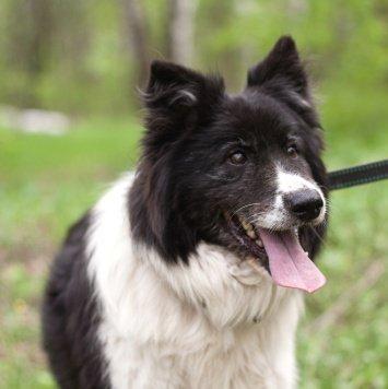Арта - Собаки в добрые руки
