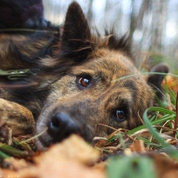 Цыган - Собаки в добрые руки