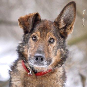 Руди - Собаки в добрые руки