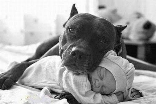 Один из поводов приютить взрослую собаку