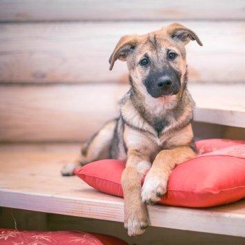 Платоша - Собаки в добрые руки