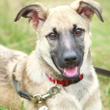 Капри - Собаки в добрые руки