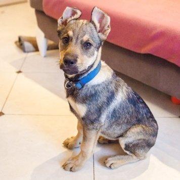 Кирюха - Собаки в добрые руки