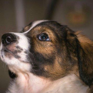 Милли - Собаки в добрые руки