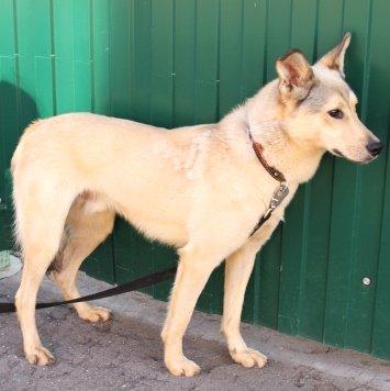 Бельчонок - Собаки в добрые руки