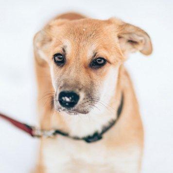 Зося - Собаки в добрые руки