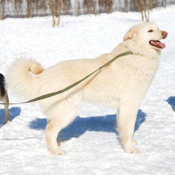 Эйм - Собаки в добрые руки