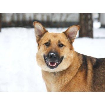 Такара - Собаки в добрые руки