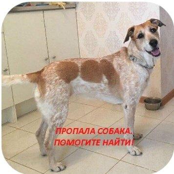 Мафи - Пропавшие собаки