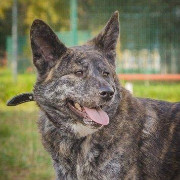 Баста - Собаки в добрые руки