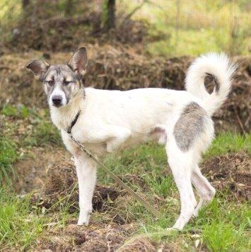 ДикБруно - Собаки в добрые руки