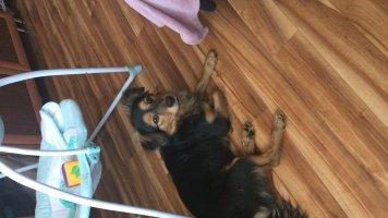 Джеки - Найденные собаки