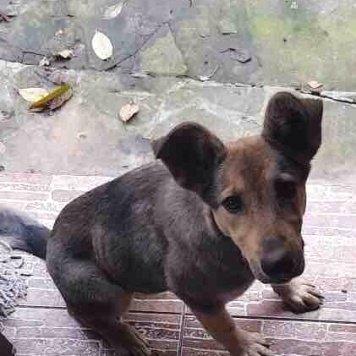 Зефирка - Найденные собаки