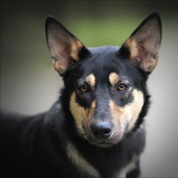 Бони - Собаки в добрые руки