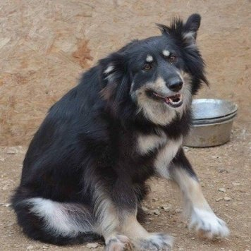 Рита - Собаки в добрые руки
