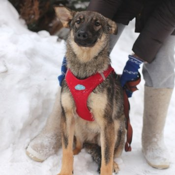 Лион - Собаки в добрые руки