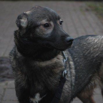 Бровка - Собаки в добрые руки