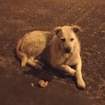 Дворняга - Найденные собаки