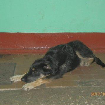 Айза - Найденные собаки