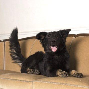 Честа - Собаки в добрые руки
