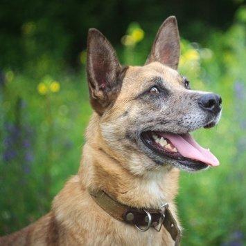 Маркус - Собаки в добрые руки