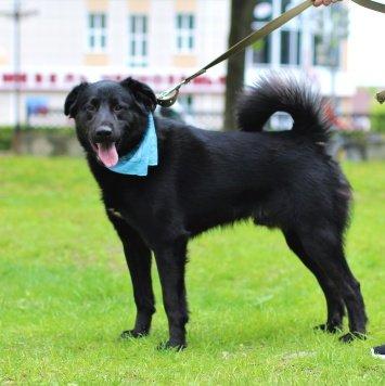 БигБэн - Собаки в добрые руки