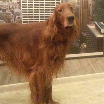 Верт - Пропавшие собаки