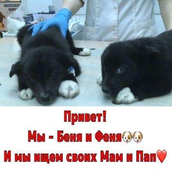 Беня и Феня - Собаки в добрые руки