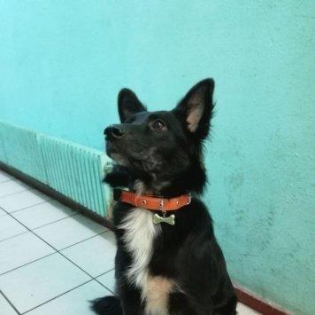 Кесси - Найденные собаки