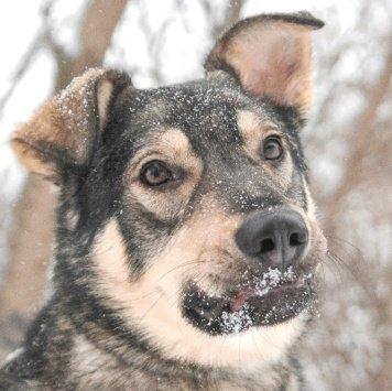 Брайт - Собаки в добрые руки