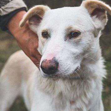 Белянка - Собаки в добрые руки