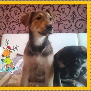 Шарик - Найденные собаки