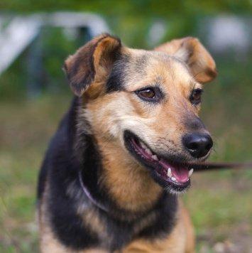 Рэмзи (девочка) - Собаки в добрые руки