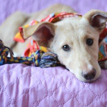 Бела - Собаки в добрые руки