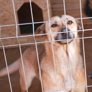 Маруся - Собаки в добрые руки