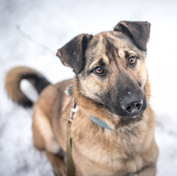 Джанго - Собаки в добрые руки
